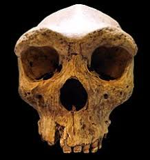 HeidelbergensisSkullChina - New research analysis, fossil finds suggest separate Evolutionary Path for E. Asians - Human Evolution News - 1