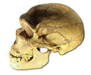 HomoSkull » FAQs » Human Evolution News » 6