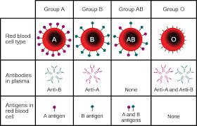 BloodTypes - NYC Doctor tells Tucker Carlson, Blood Types do matter for Coronavirus - Human Evolution News - 1