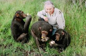 JaneGoodall - Chimpanzees, Other Great Apes vulnerable to COVID-19? - Human Evolution News - 2