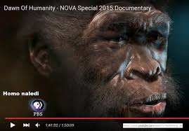 HomoNaledi2 » John Hawks announces to CARTA Australopithecus Afarensis contemporary with modern Humans » Human Evolution News » 2