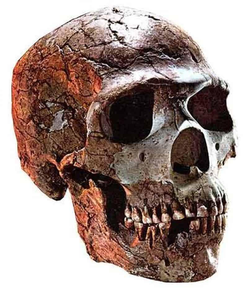 a10 » Defined » Human Evolution News » 1
