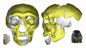 ChinaDenisovanSkull - Left-biased Discover Mag acknowledges human skull find in China may confirm Multi-regional - Human Evolution News - 5