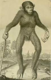 Chimpanzeeold » Rising Star paleoanthropologist Paige Madison praises 16th Century Race Realist Edward Tyson » Human Evolution News » 6