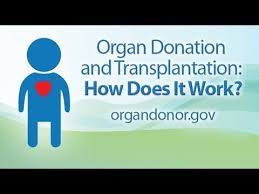 OrganDonors » Whites over-represented in Organ Donation: Non-Whites less willing, creating problems for Mixed-Race » Human Evolution News » 9