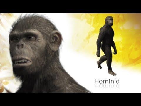 AustralopithecusAfarensis » Play on Race-Mixing, Re-opens in London: Australopithecus Afarensis w/Homo sapiens » Human Evolution News » 5