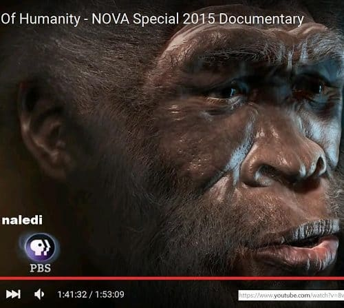 HomoNalediPBS » Africans have more archaic, ape like gene variants says top geneticist Dr. Shi Huang » Human Evolution News » 4