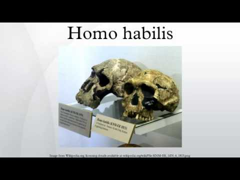 "Homohabilis » GUEST POST: ""Handy Man"" Habilis in the Genus Homo? » Human Evolution News » 4"