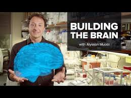AlyssonMuotri » Researchers may have discovered why Euros, Asians have more brain power » Human Evolution News » 3