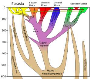 SubSaharanChart » Prof. John Hawks: New evidence Africans have at least 2% archaic ghost species DNA » Human Evolution News » 1