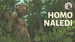 HomonalediStefanMilo » Lee Berger: Homo naledi fossils safe and secure from looters in South Africa » Human Evolution News » 1