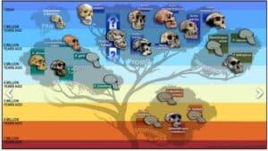 Human Origins Bush