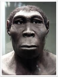 HomoerectusMan » Subspecieist Definition » Human Evolution News » 4